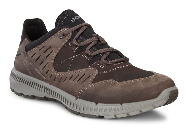 TERRAWALK MEN'S (بني)