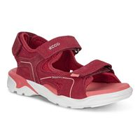 BIOM RAFT (Red)